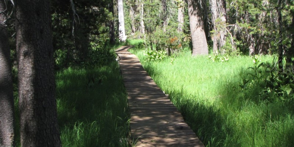 Boardwalk over Grassy Swale on the PCT. – Ben Miles